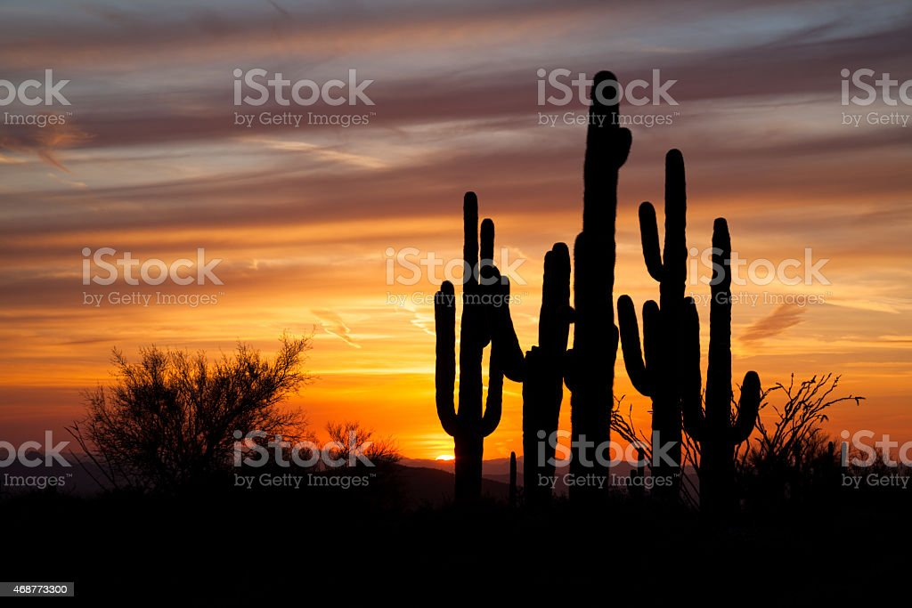 Saguaro Group Silhouette stock photo