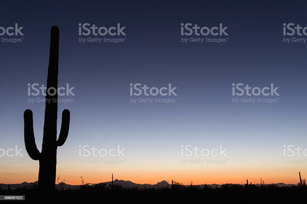 Saguaro National Monument stock photo