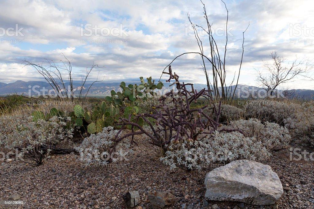 Saguaro National Park East stock photo
