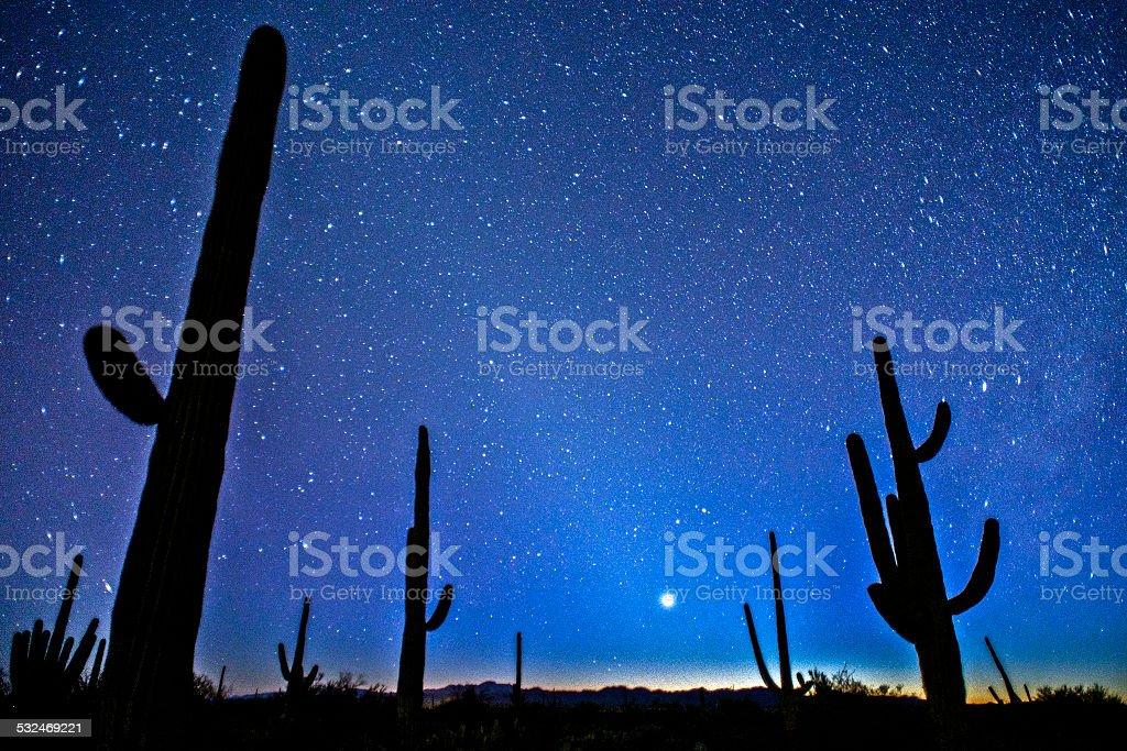 Saguaro Night Sky stock photo