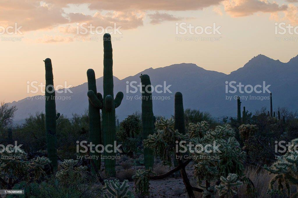 Saguaro NP Sunset stock photo