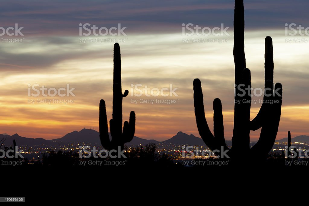 Saguaro Silhouette And City Lights stock photo