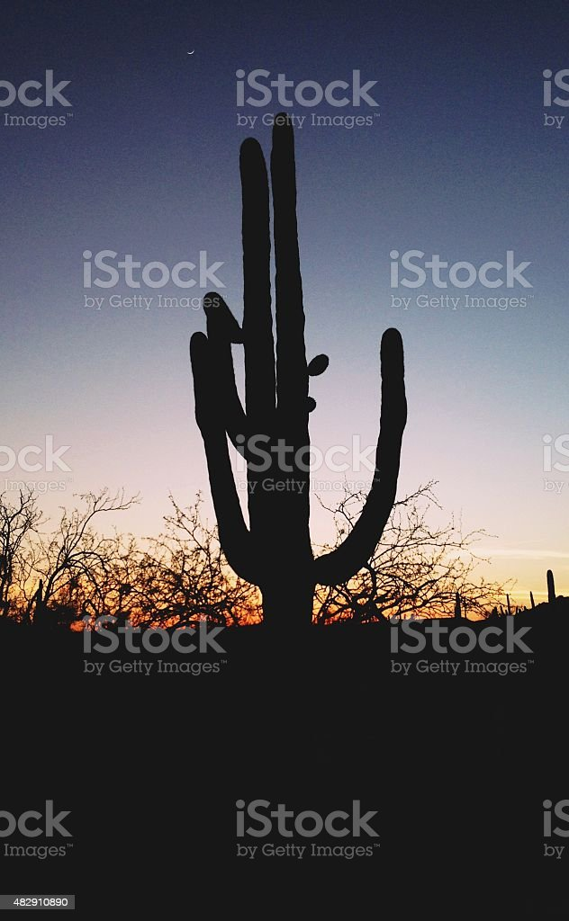 Saguaro Silhouette royalty-free stock photo