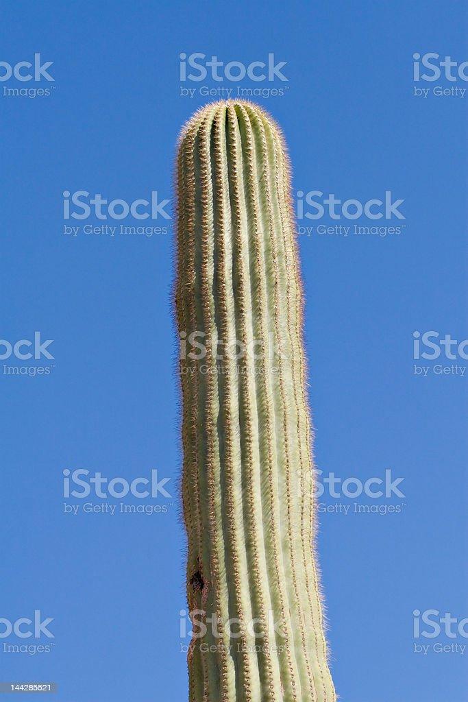 Saguaro Stem royalty-free stock photo