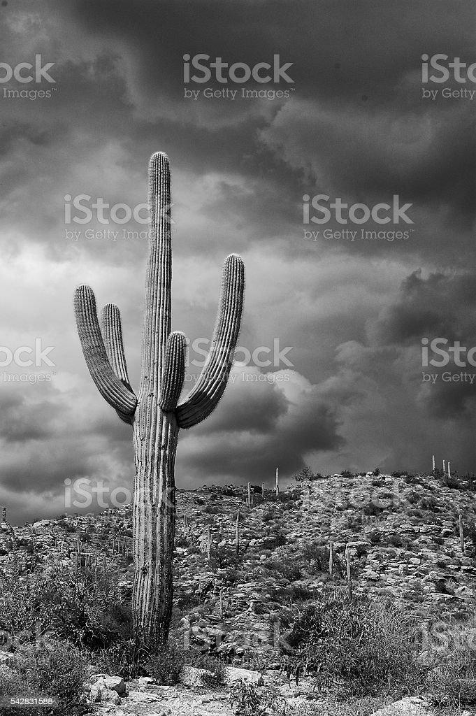 Saguaro Storm stock photo