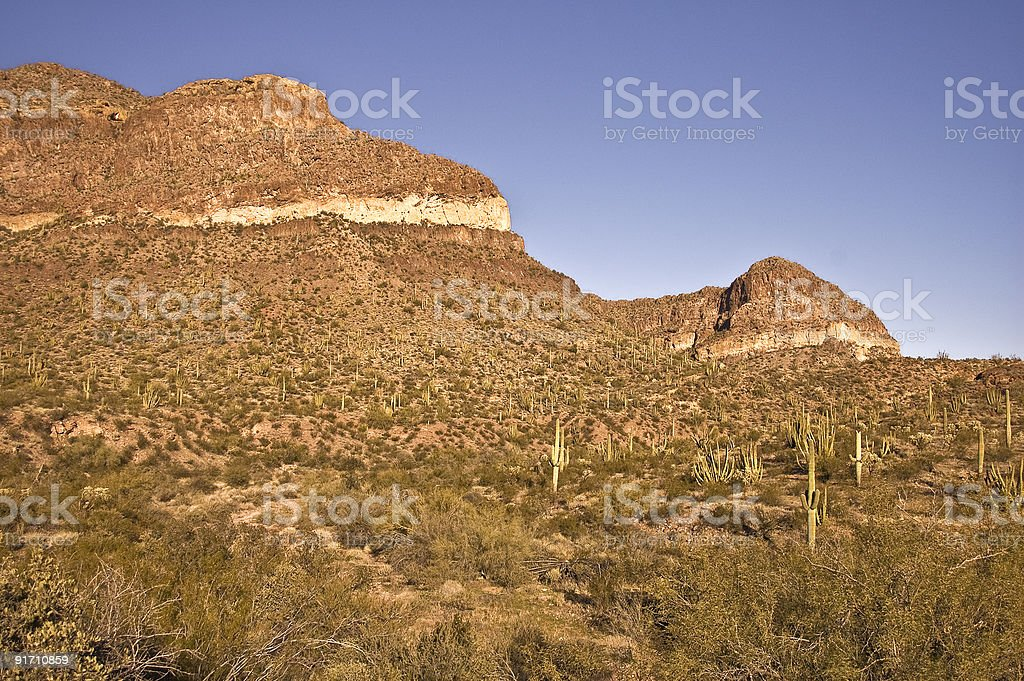 Saguaro Studded Hillside royalty-free stock photo