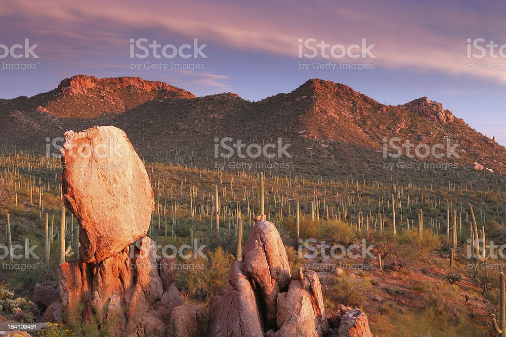 Saguaro Sunset royalty-free stock photo