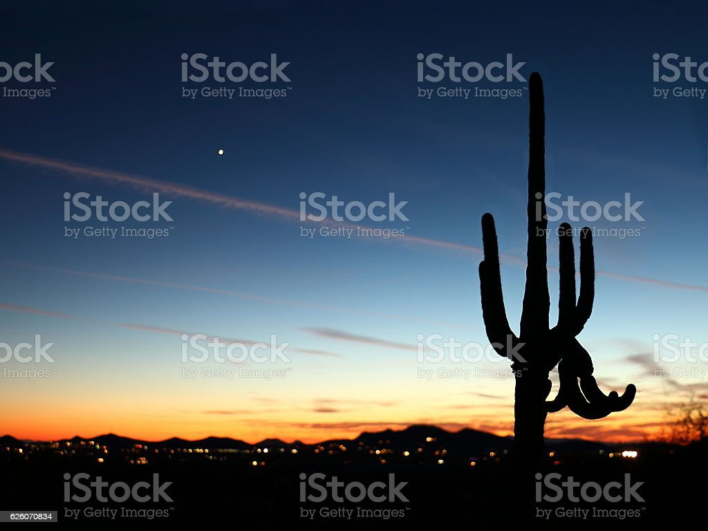 Saguaro Sunset stock photo