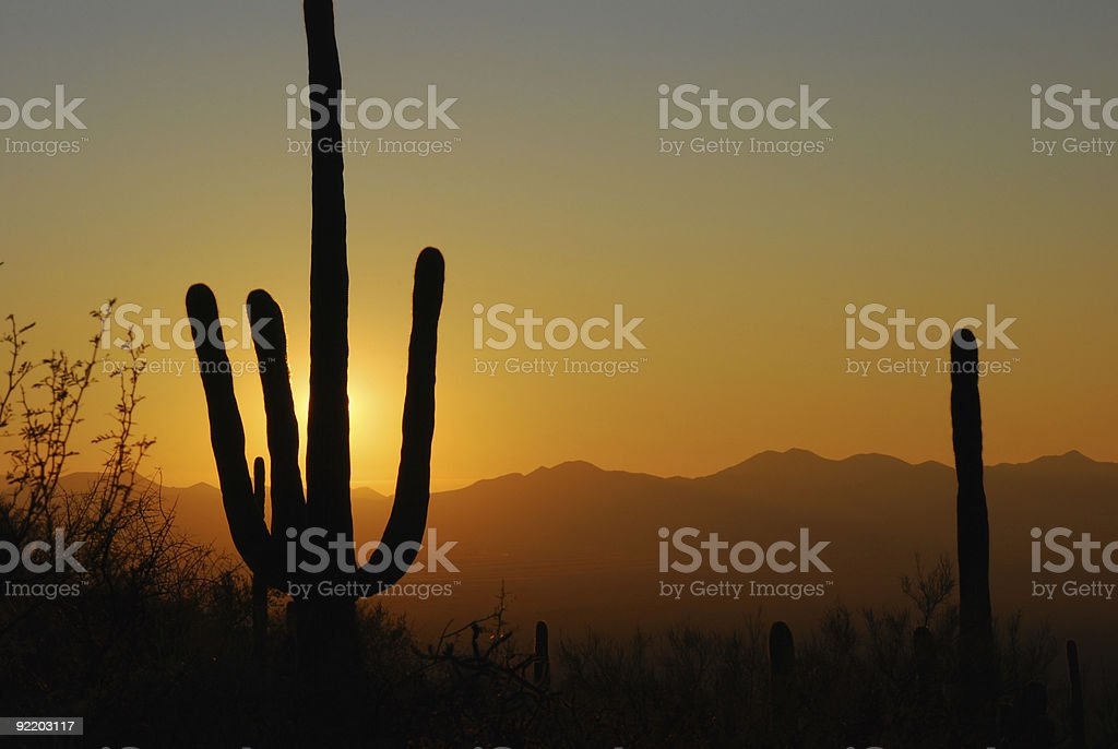 Saguaro Sunset stock photo