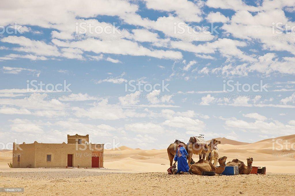 Sahara Berber with Camels Erg Chebbi Morocco stock photo