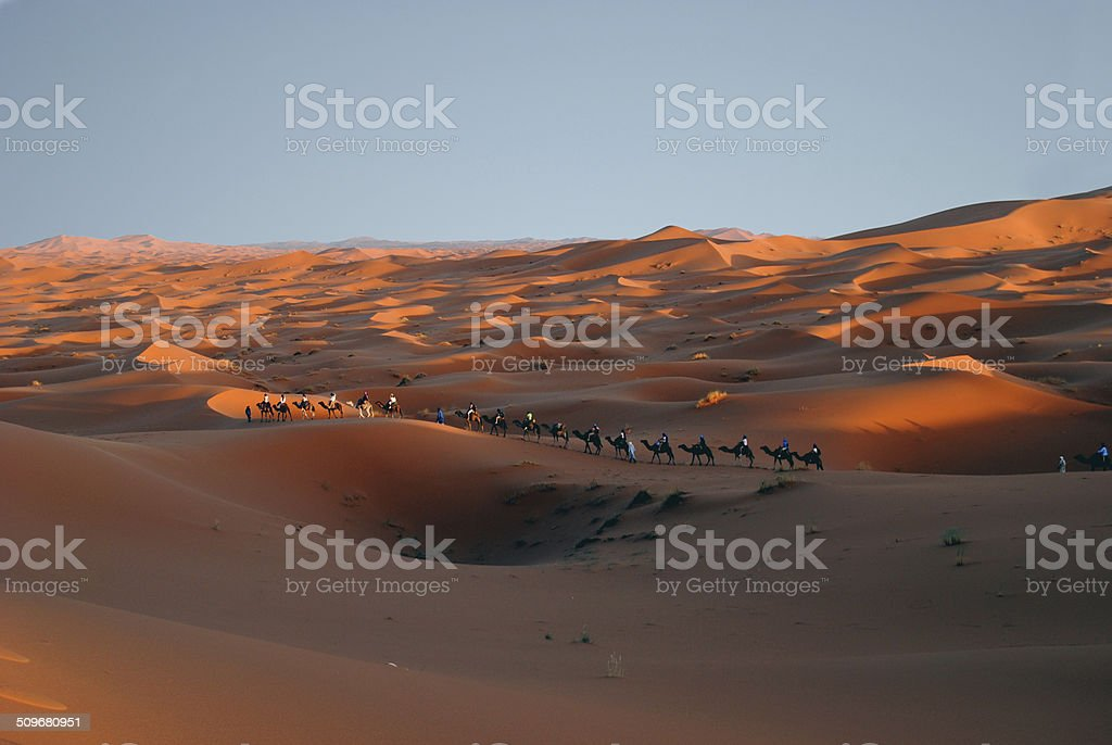 Sahara desert camel caravan stock photo