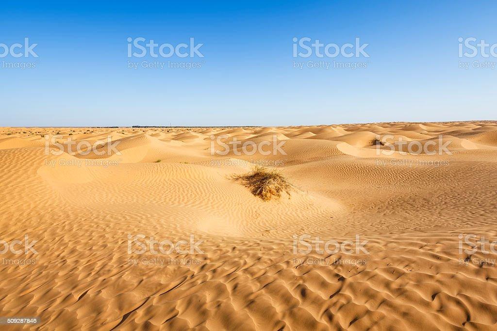 Sahara desert near Ksar Ghilane oasis in south of Tunisia stock photo