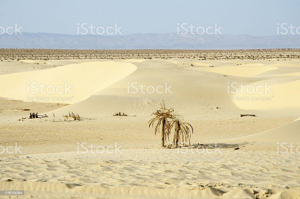 Sahara dessert royalty-free stock photo