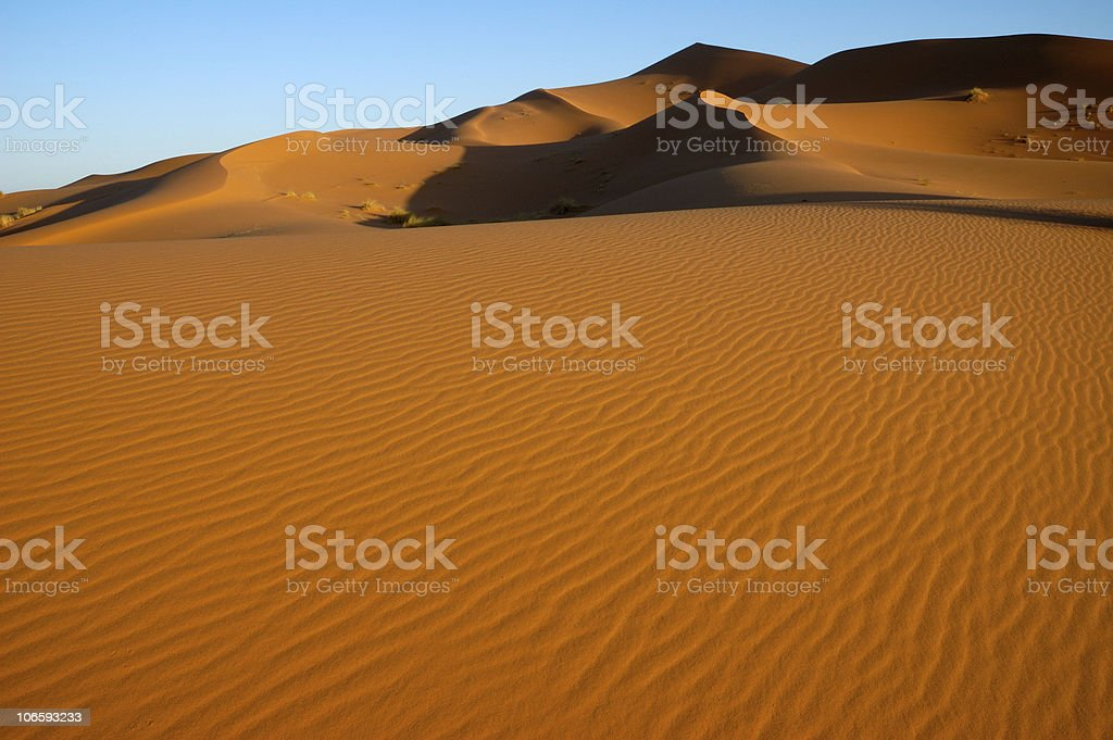Sahara Dune field stock photo