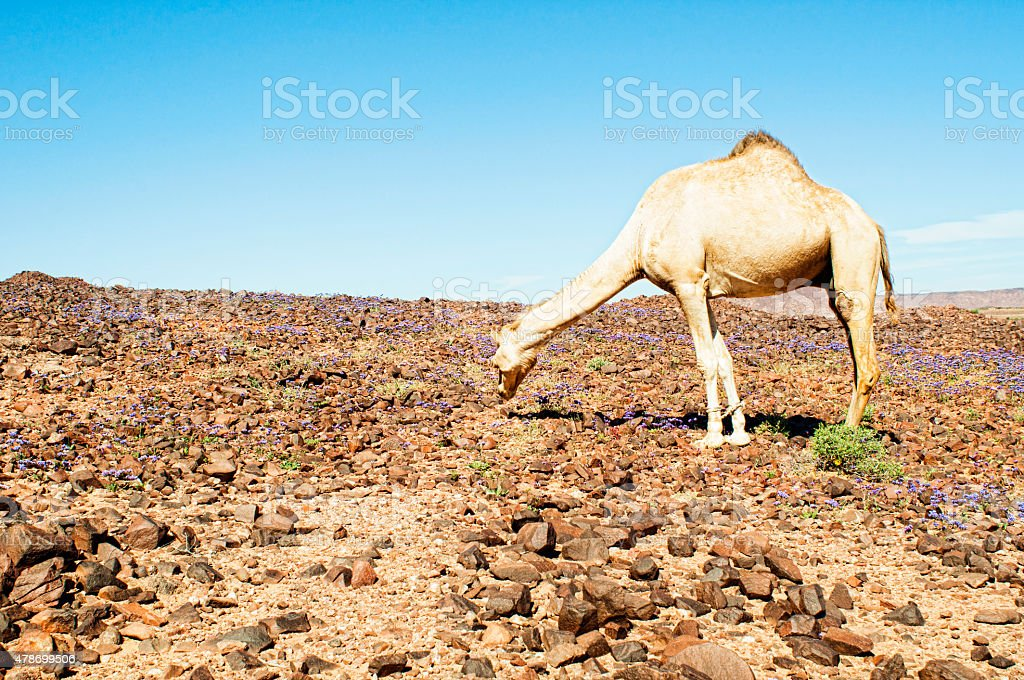 sahara landscape stock photo