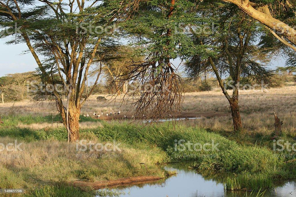 Sahari Trees and Oasis royalty-free stock photo