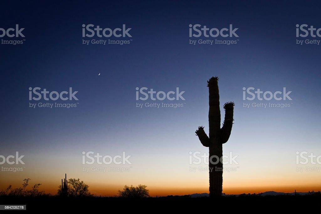 Sahuaro Silhouette Dawn Clear Sky Gradient stock photo