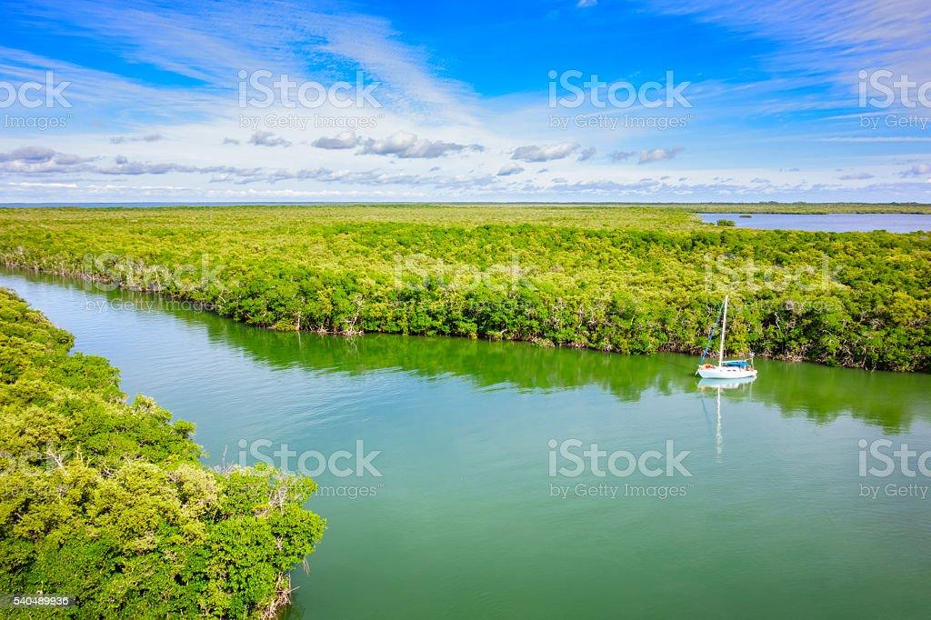 Sail Boat and Mangrove Forest at Key Largo Florida Keys stock photo