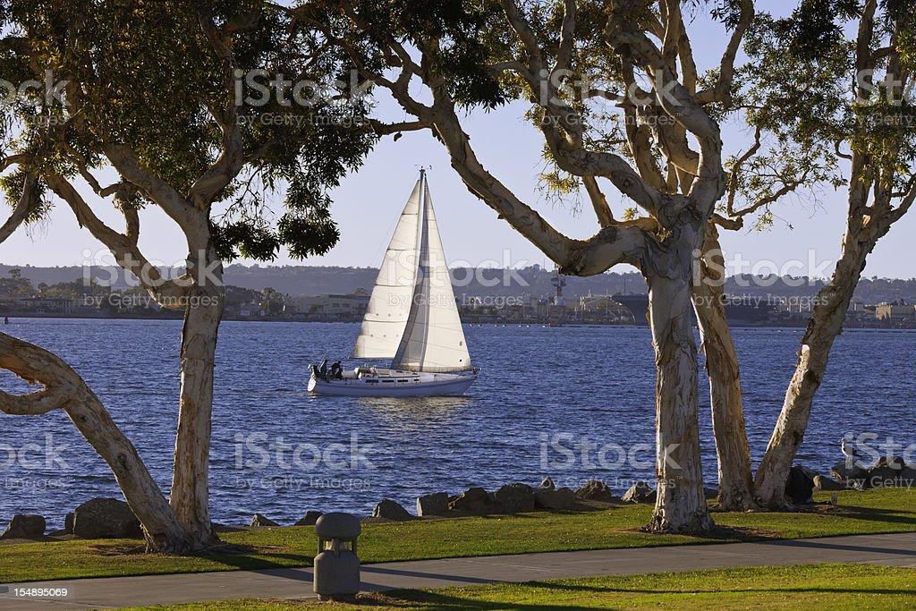 Sailboat In San Diego Bay stock photo