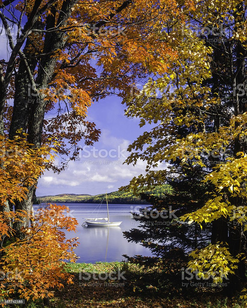 sailboat on lake framed by vibrant autumn foliage stock photo