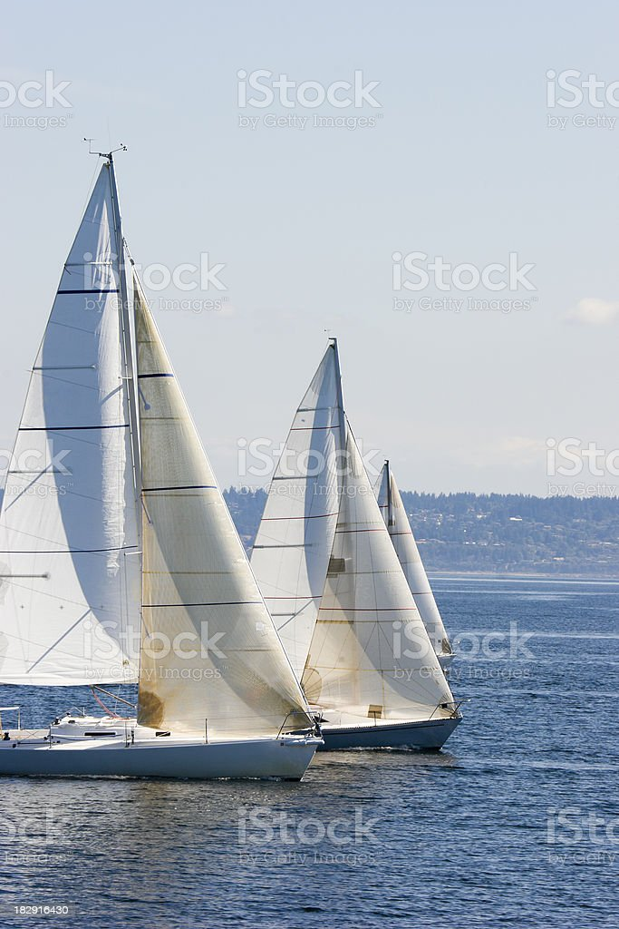 Sailboats in line at a Regatta royalty-free stock photo