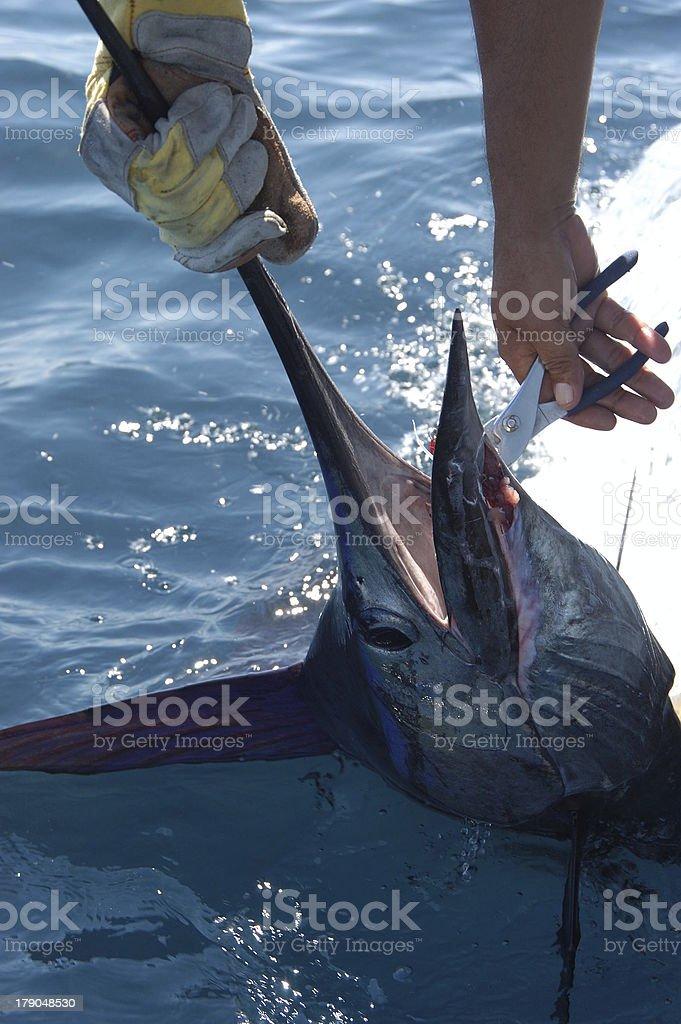 Sailfish 3 stock photo
