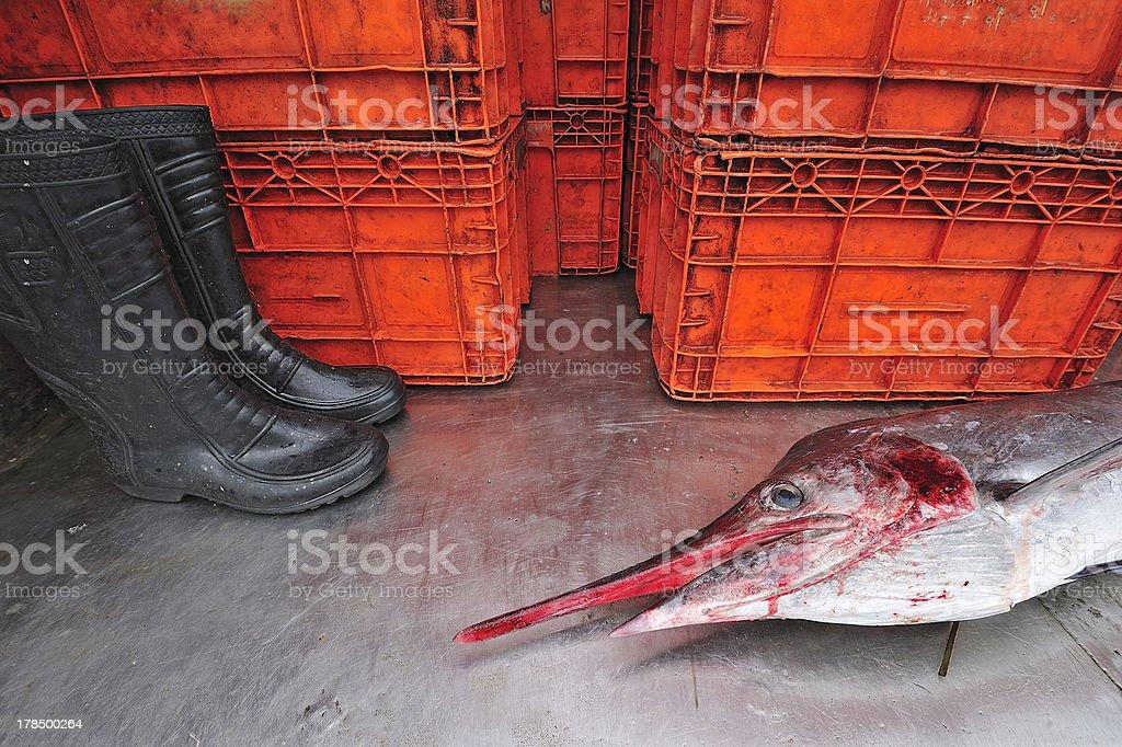 Sailfish in fish market, Thailand. royalty-free stock photo
