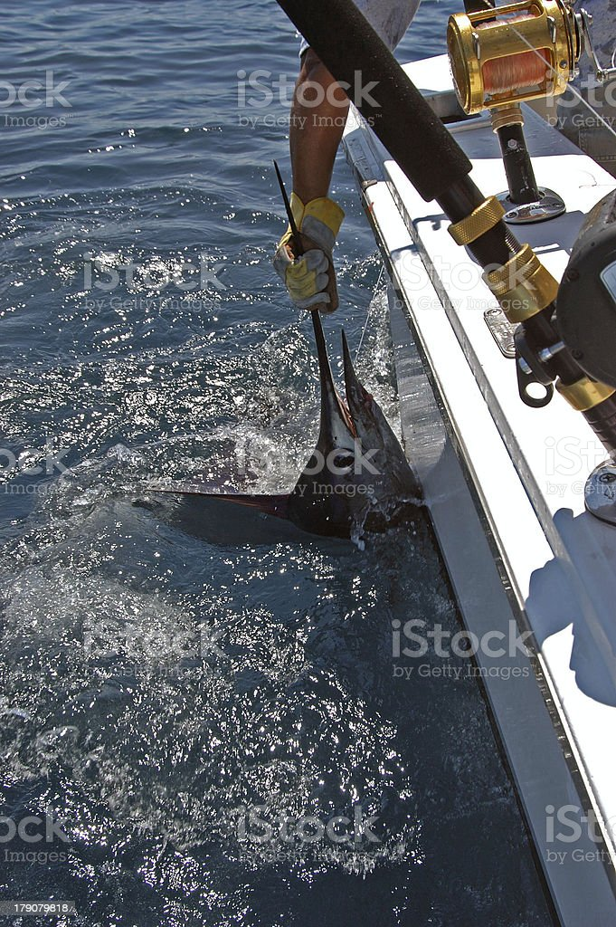 Sailfish stock photo