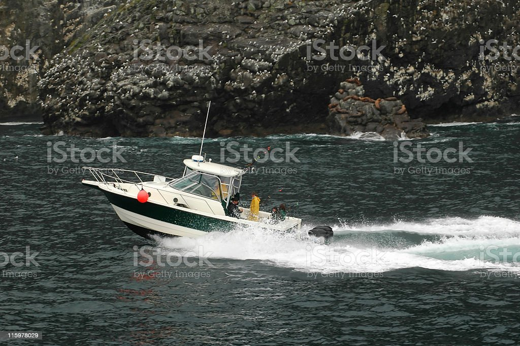 Sailing along fjords with wildlife stock photo