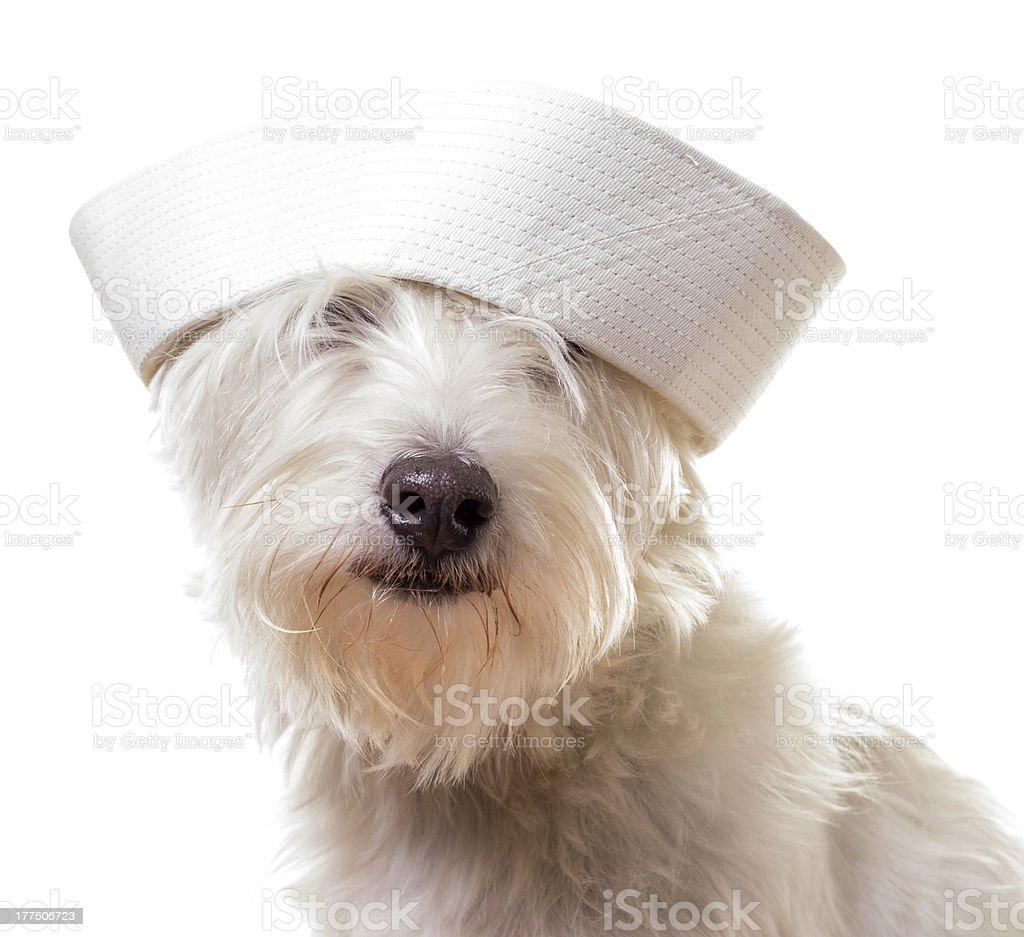 Sailor Dog royalty-free stock photo