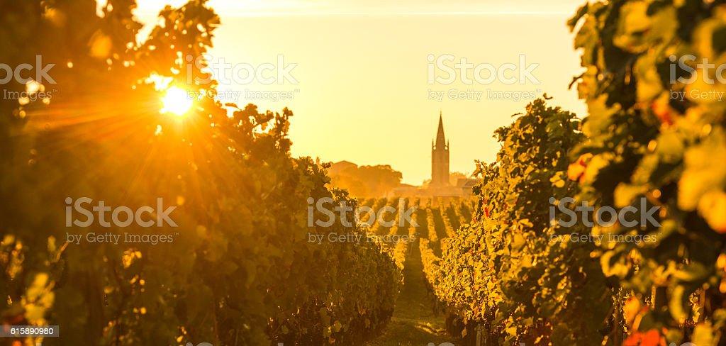 Saint Emilion Vineyard Sunrise, Bordeaux Wine stock photo