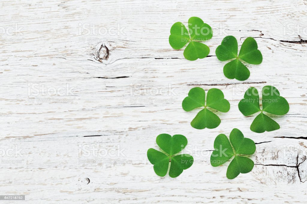 Saint Patricks Day background with green shamrock. Flat lay. stock photo