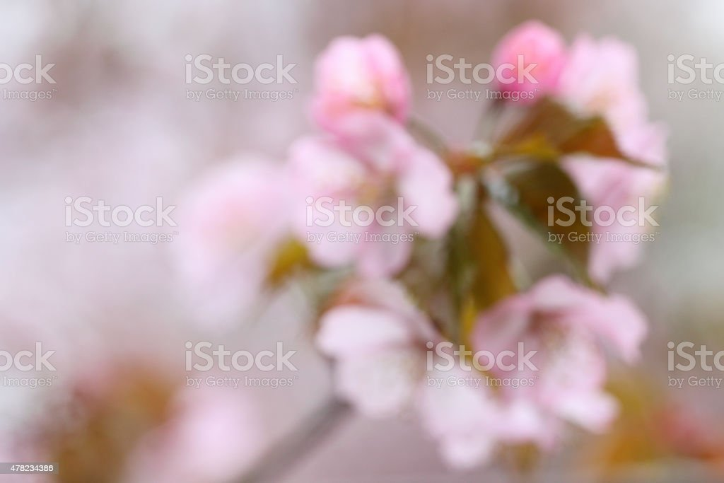 Sakura - Abstract background stock photo
