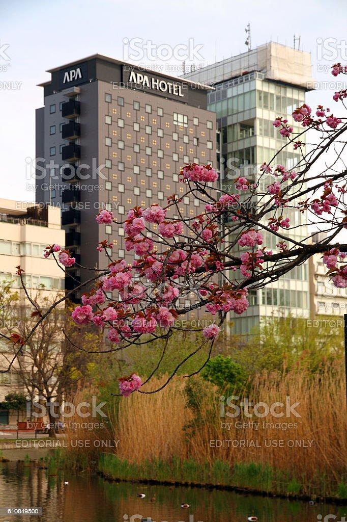 Sakura and Hotel stock photo
