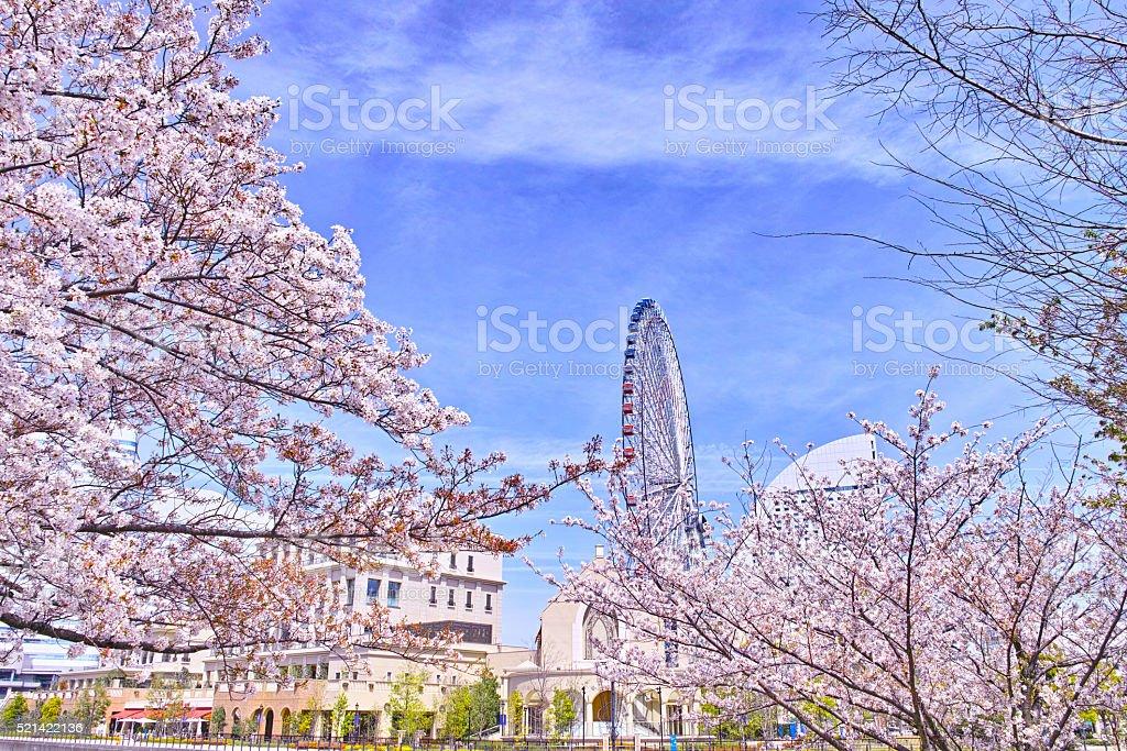 Sakura and Yokohama landscape stock photo