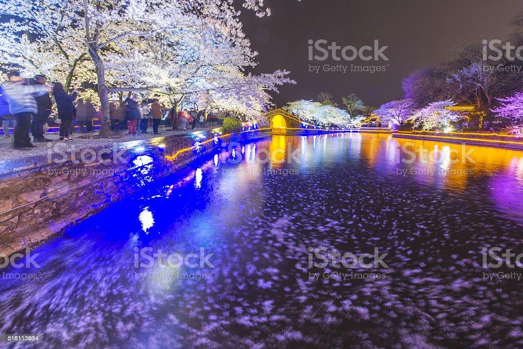 Sakura arch night in Wuxi, China stock photo