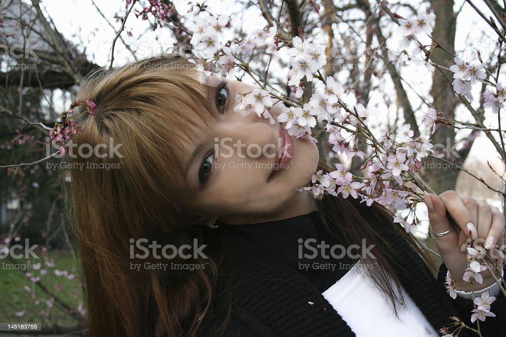 Sakura blooming royalty-free stock photo