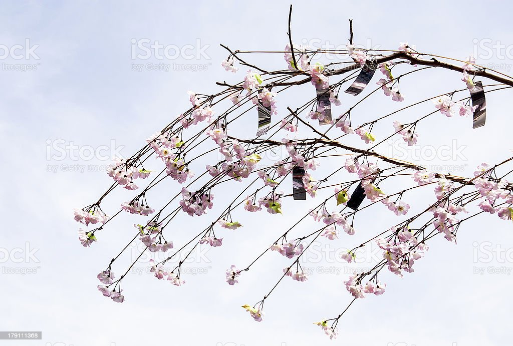 Sakura branch royalty-free stock photo