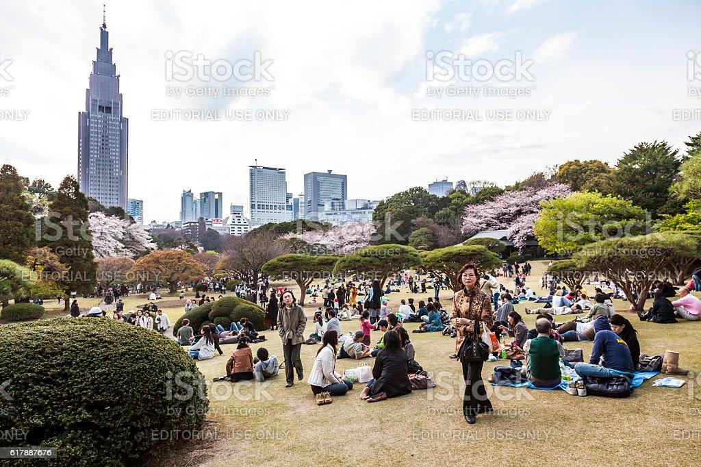 sakura picnic stock photo