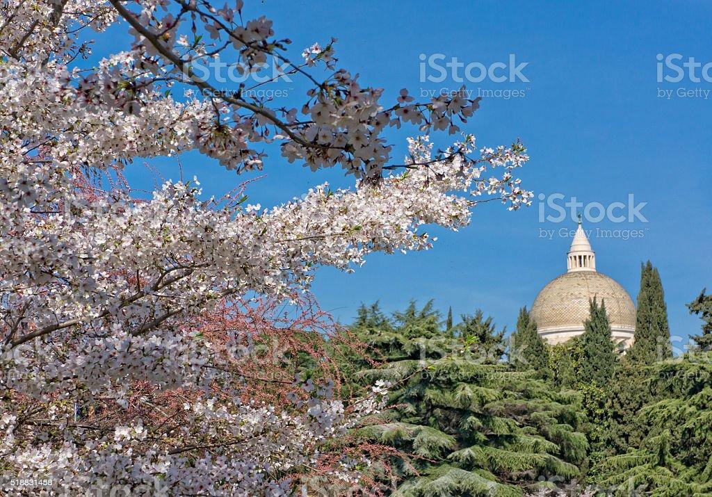 Sakura tree flowers  in the EUR district, Rome, Italy stock photo