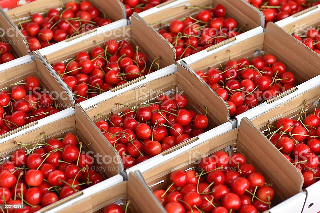 sakuranbo,cherry stock photo