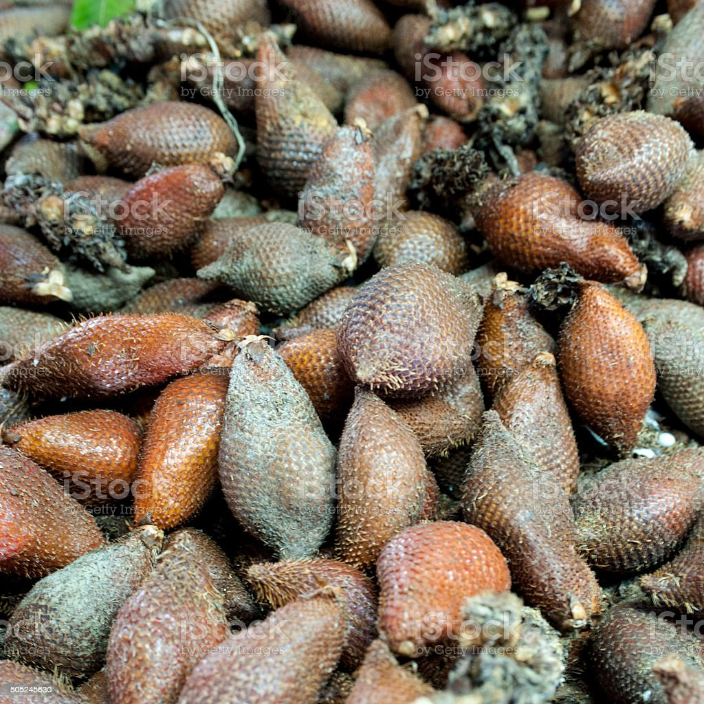 salacca fruit stock photo