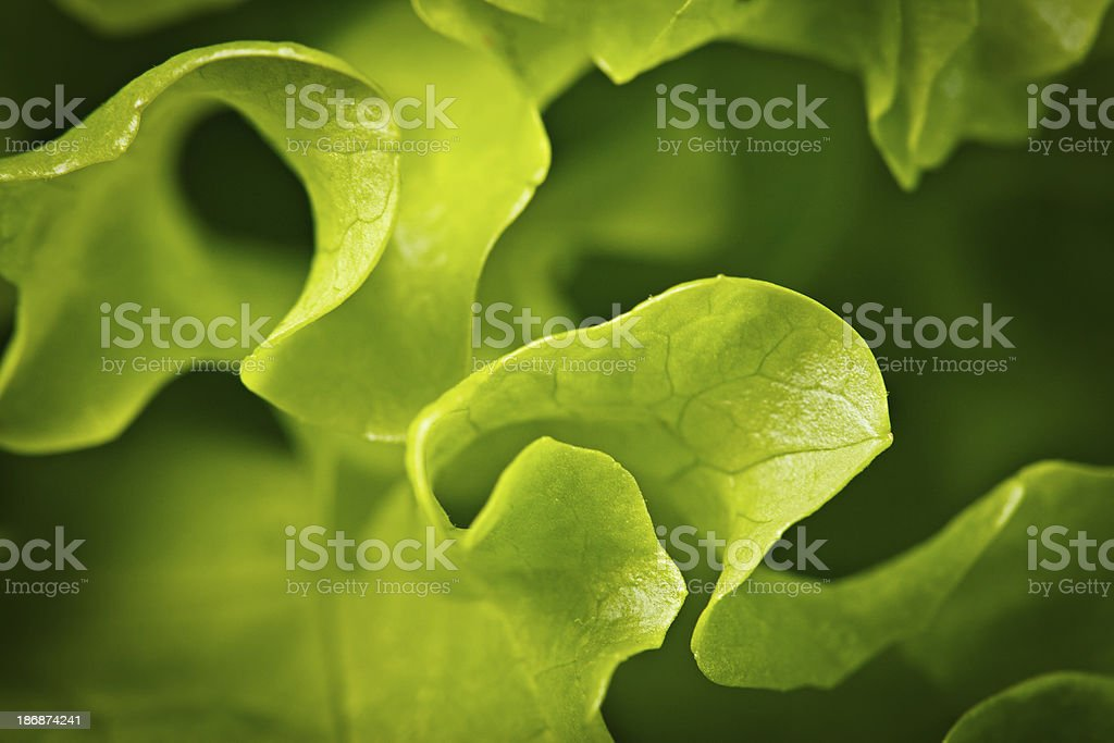 Salad background. XXXL stock photo