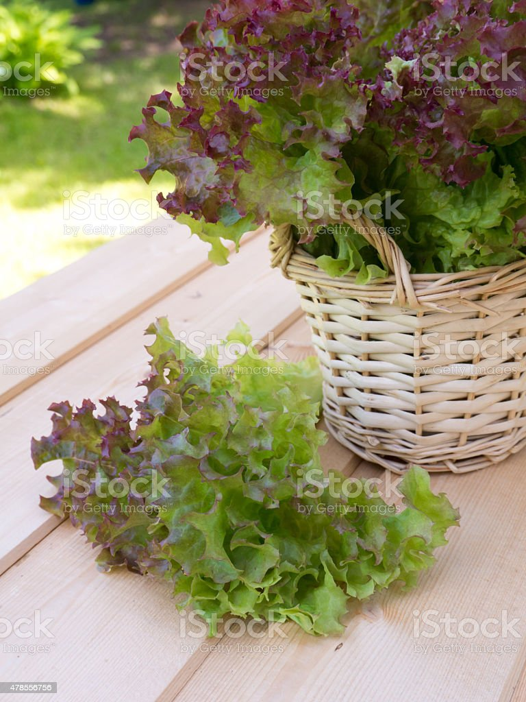 Salad in the basket stock photo