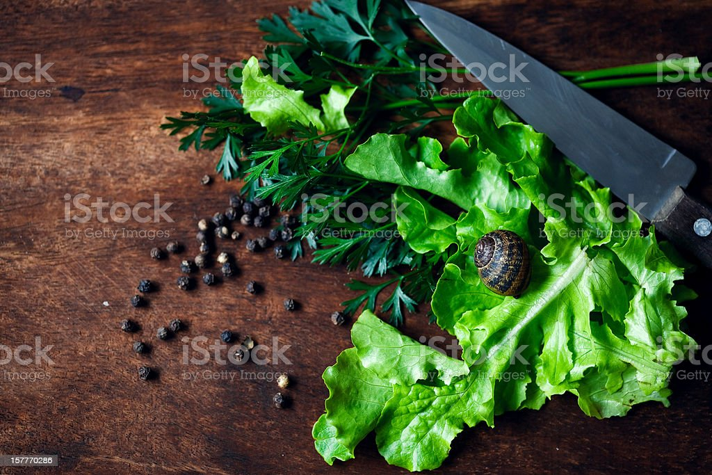 Salad Ingredients stock photo