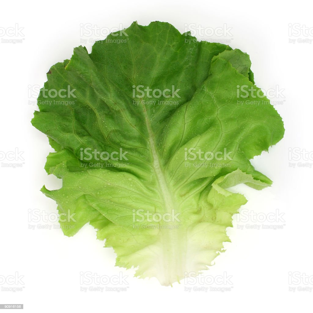 Salad leaf royalty-free stock photo