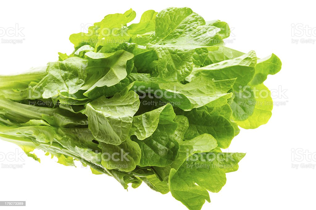 Salad leaves royalty-free stock photo