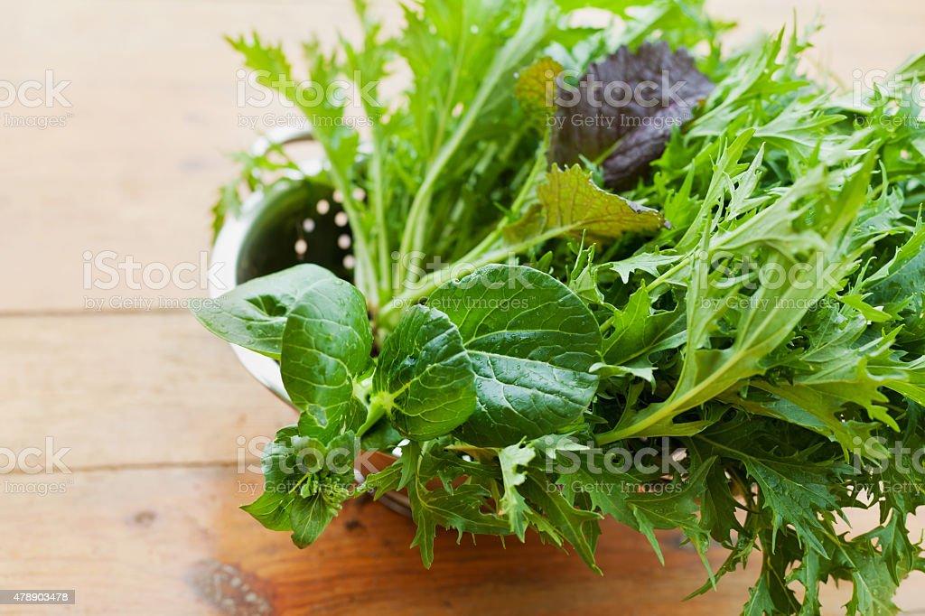 salad leaves with mizuna, lettuce, pakchoi, tatsoi, kale, spinach, mustard stock photo