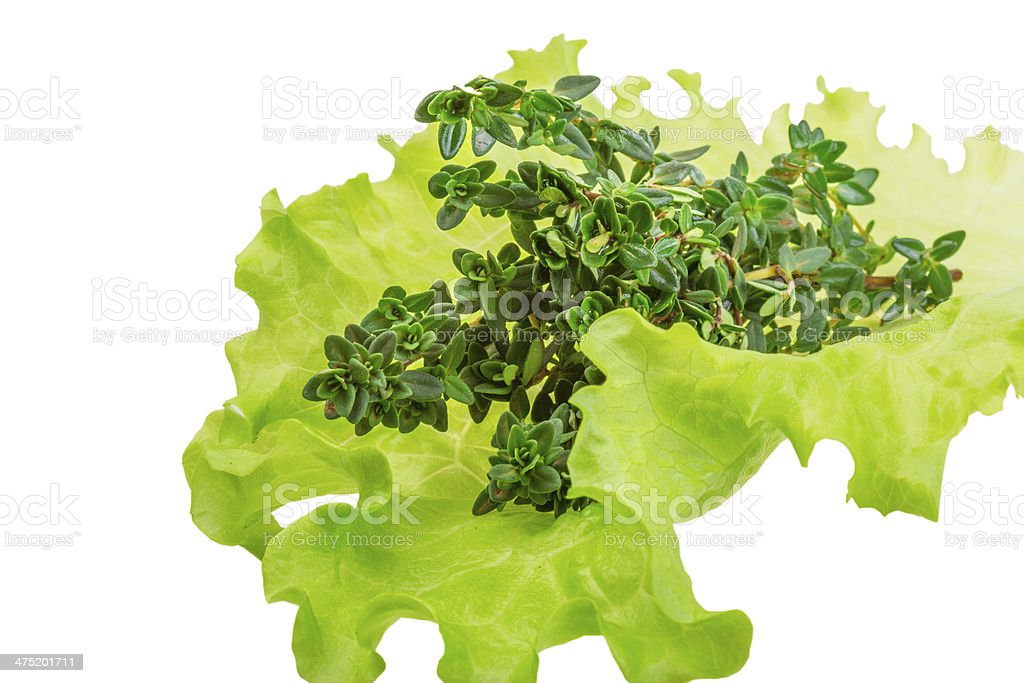 Salad leaves with thyme royalty-free stock photo