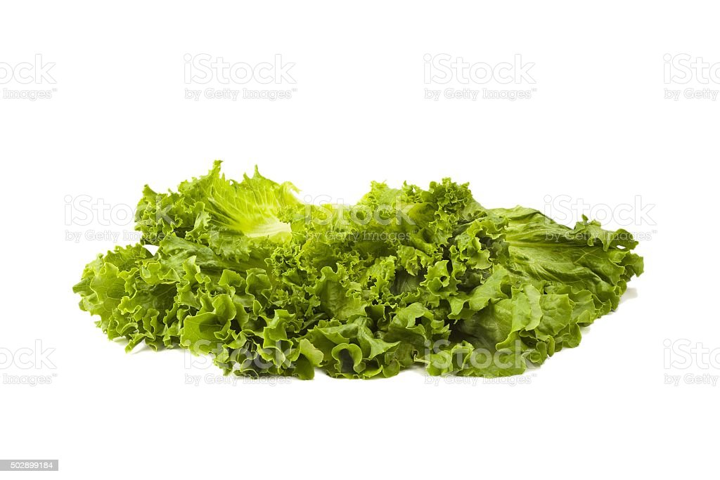 Salad Lettuce stock photo